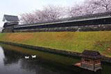 勝竜寺城公園 濠のアヒル