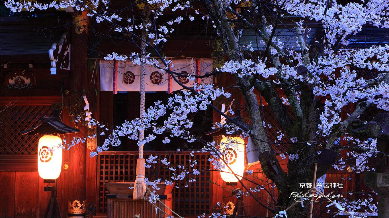 今宮神社 桜と疫社 壁紙