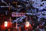 今宮神社 桜と疫社