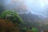 岩船寺の馬酔木と本堂