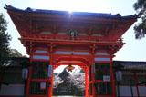新日吉神宮 楼門越しの桜
