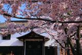 新日吉神宮 サクラと土蔵