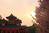 平安神宮 左近の桜と白虎楼