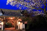 将軍塚の桜と福徳門