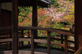 京都等持院 太鼓橋越しの山桜