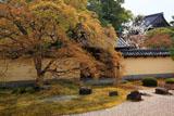 京都等持院 萌黄色の方丈庭園