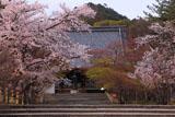 仁和寺の桜と金堂