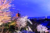高台寺 夜桜と八坂の塔