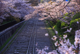 蹴上インクライン 桜並木