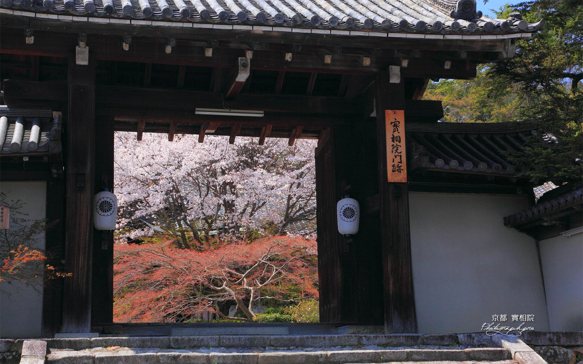 実相院 御門越しの山桜