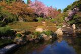 妙心寺退蔵院 余香苑のしだれ桜