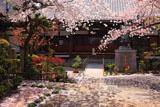 墨染寺 本堂前の花筵