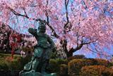 京都正法寺 紅枝垂桜と春日不動明王