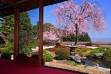 京都正法寺 宝生苑のベニシダレザクラ