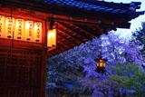 赤山禅院拝殿と桜