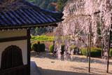 善峯寺 経堂と桂昌院の枝垂桜