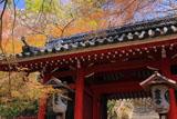 京都金蔵寺仁王門と萌える木々