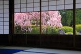 城南宮 楽水軒からの枝垂れ桜