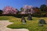 城南宮 離宮の庭からの枝垂れ桜