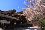 北野天満宮 桜と社殿