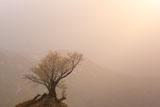 黄砂に霞む樽口峠の桜