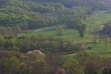 田代平放牧場の大山桜