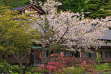 八甲田の桜 蔦温泉旅館