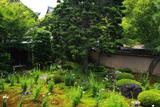 天得院 キキョウ庭園と東福寺堂宇