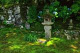 大原寺実光院 旧理覚院庭園のアジサイ