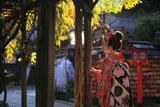 安井金比羅宮 舞妓と藤棚