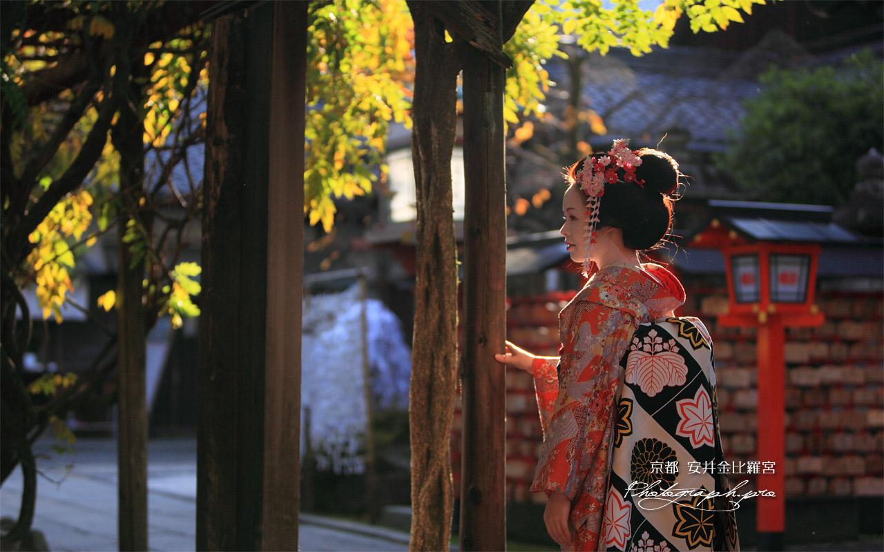 安井金比羅宮 舞妓と藤棚 壁紙