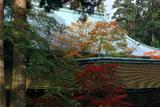比叡山延暦寺 紅葉の根本中堂