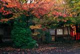 車折神社 桜紅葉