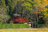 落柿舎 紅葉