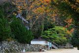 京都水尾 桜紅葉の円覚寺