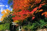 京都樒原 原神社の紅葉