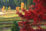 京都宕陰 紅葉と越畑の棚田