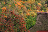 京都宕陰 柿と越畑の茅葺き民家