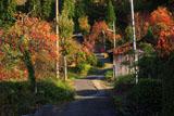 京都宕陰 越畑の柿のある坂道