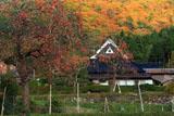 京都宕陰 越畑の柿と民家