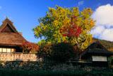 京都宕陰 河原家の紅葉と山茶花