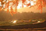 京都宕陰 夕照の樒原の鎧田