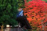 慈眼禅寺 釈迦堂と紅葉