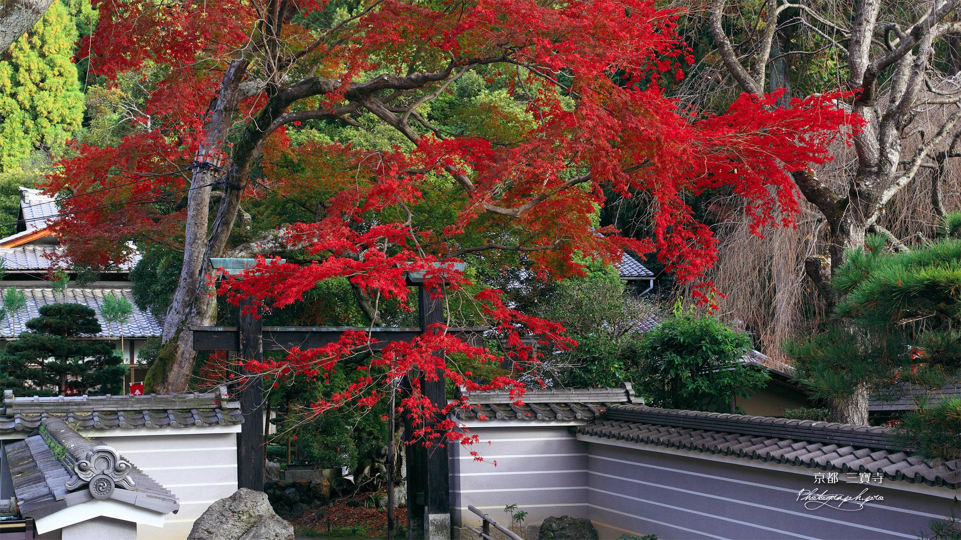 京都三寶寺 紅葉と山門