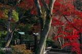 京都三寶寺 紅葉と冠木門