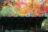 滝口寺 山門と紅葉
