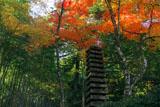 滝口寺 十三重塔と紅葉