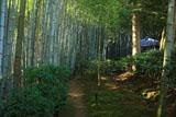 滝口寺 竹林と小松堂