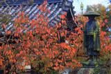 上品蓮台寺 弘法大師像と桜紅葉