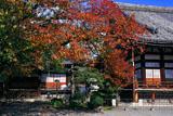 本隆寺 桜紅葉に祖師堂と本堂